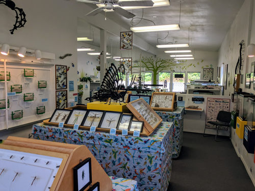 Nature Gift Store & Bug Museum Interior